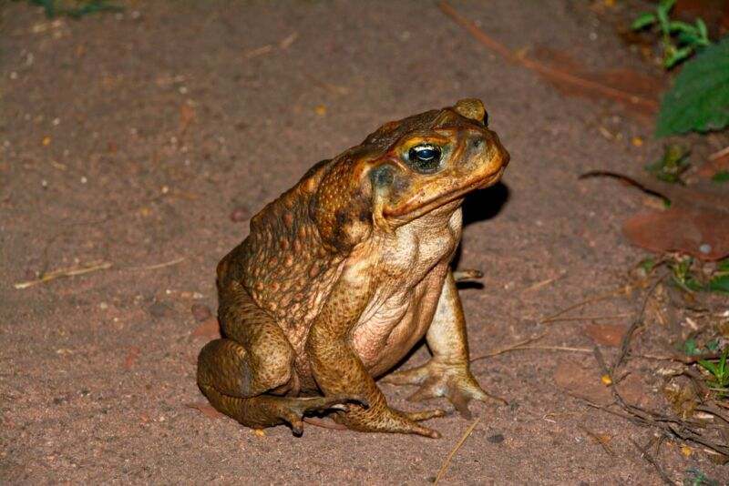 A toad sits, looking harmless.