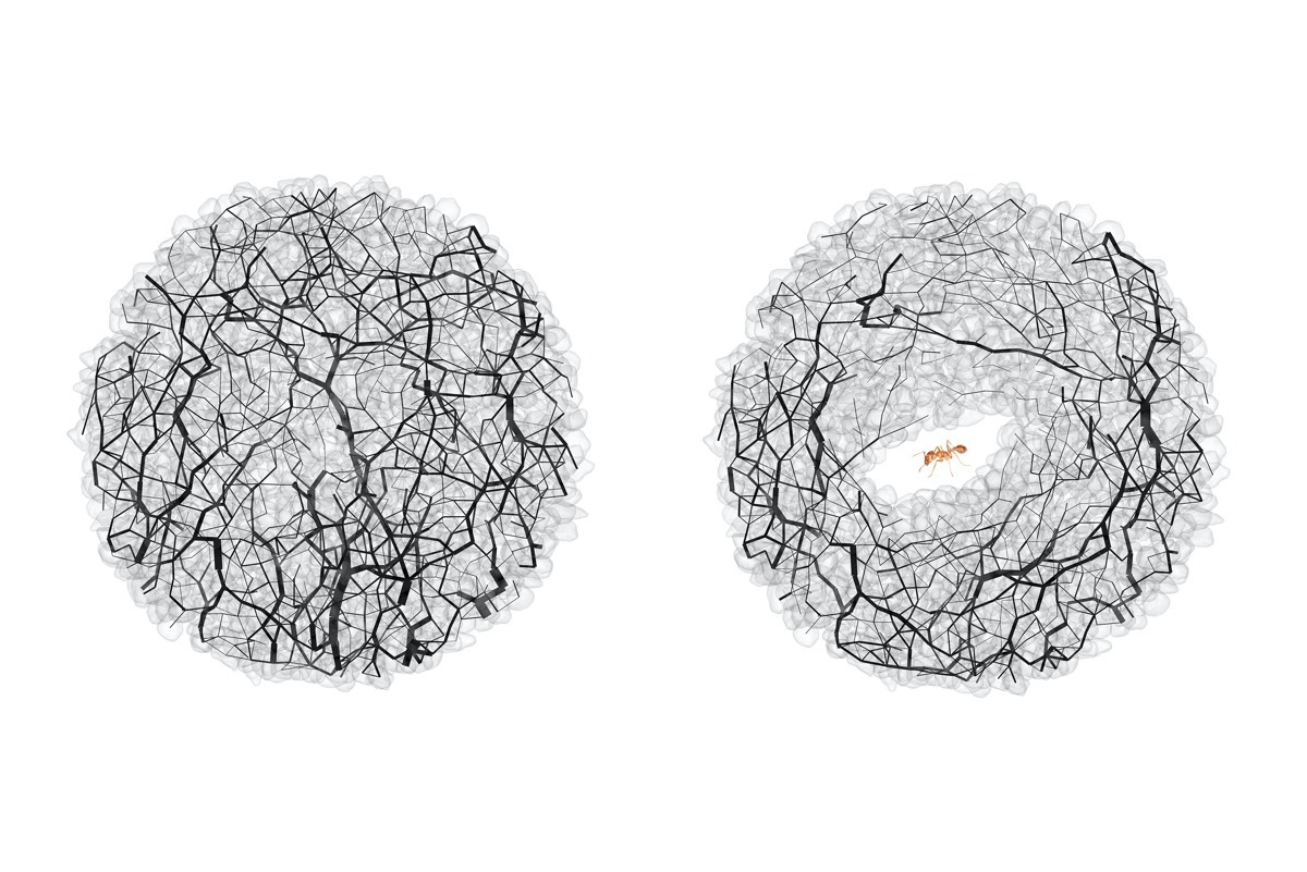 Granular forces (black lines) at the same location in the soil before (left) and after (right) ant tunneling.