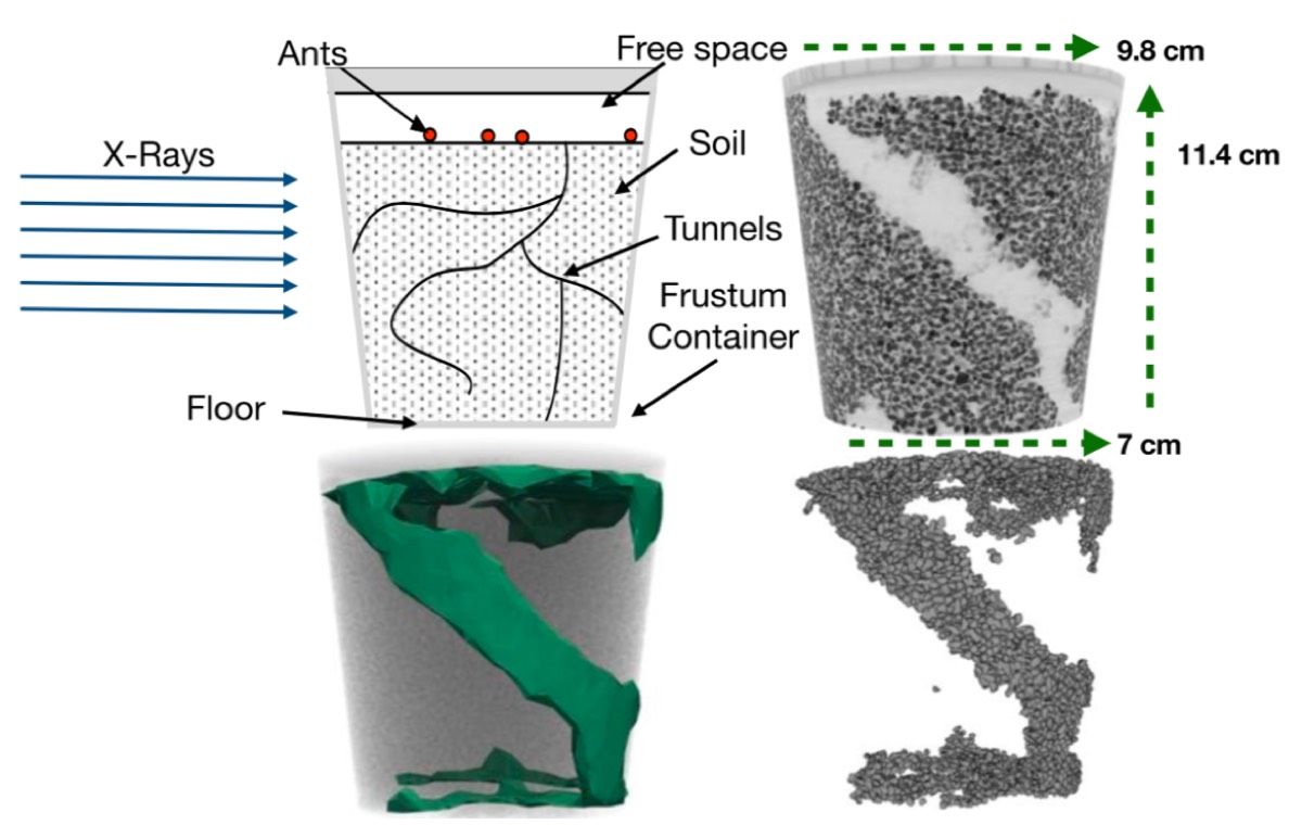 Upper left: The experimental design. Upper right: X-ray image of a completed tunnel. Lower left: Fitting a model of removed particles. Lower right: Digital recreation of the particles removed by ants in initial location.