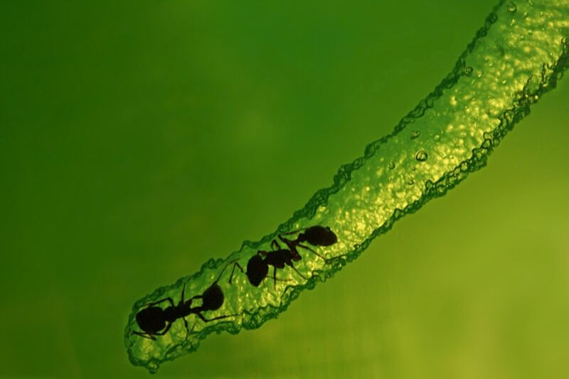Two ants in a clear, greenish tunnel.