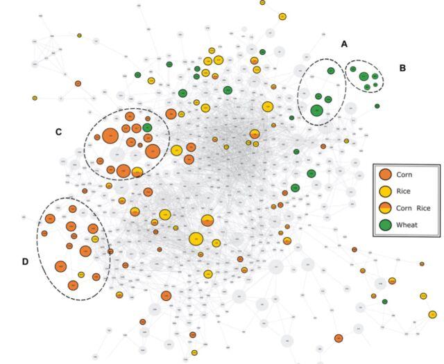 Massenspektralübereinstimmungsnetzwerk für chemische Verbindungen in Bier.