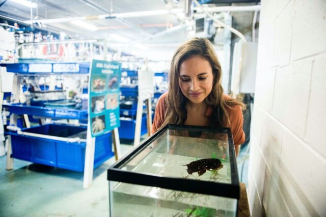 Co-author Alex Schnell (University of Cambridge) with a cuttlefish in a tank at the Marine Biological Laboratory, Woods Hole, Mass.
