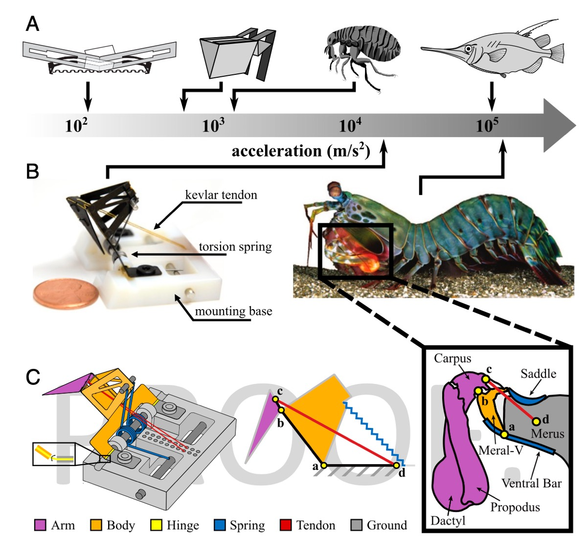 Schematic overview of biologically inspired physical models that generate extreme accelerations.