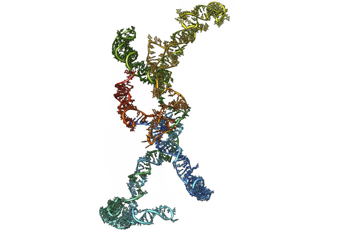 RNAs can form complicated structures thanks to internal base pairing. This makes understanding their function challenging.