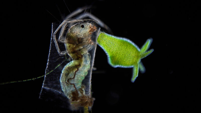 Image of a green object next to the head of an insect.