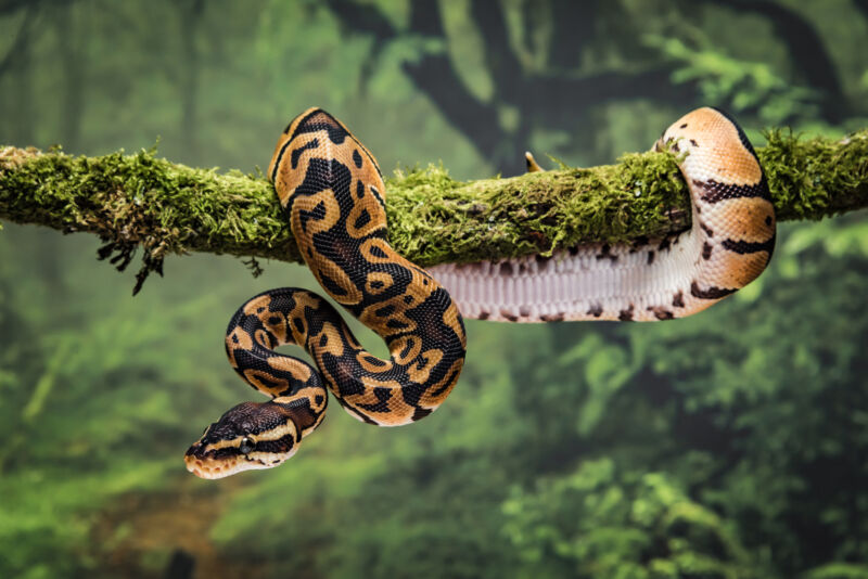 Image of a snake on a branch.