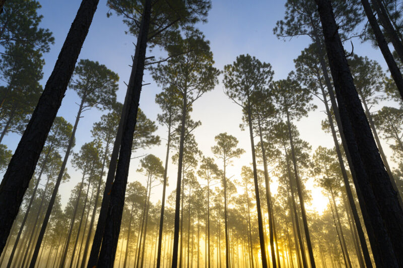 300-year-old tree rings confirm recent uptick in hurricane-driven rainfall