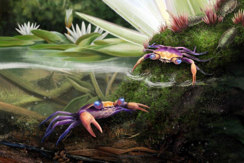 Fossilized dinosaur-era crab bridges evolutionary gap