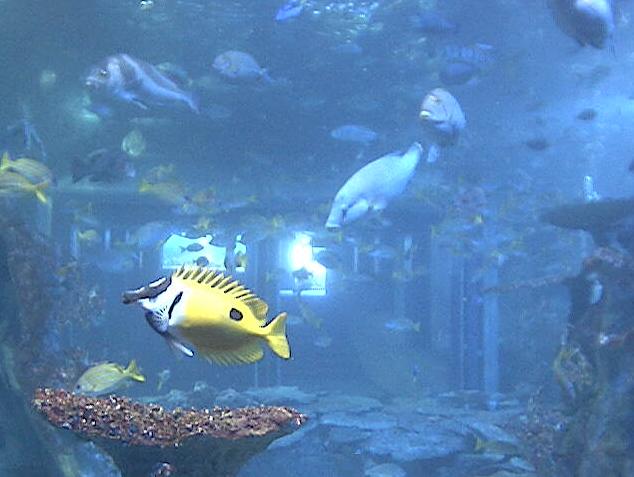 A large aquarium