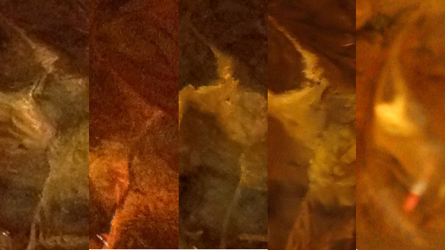 100 percent crop of drink images. From left to right: iPhone 4S, iPhone 4, Samsung Galaxy SII, Olympus XZ-1, Canon 20D.