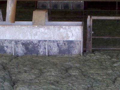 Foam covers a manure pit.