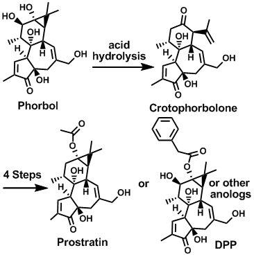 HIV Drug Synthetic Scheme