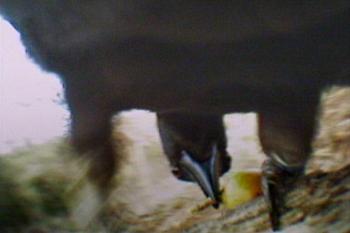 Bird cam