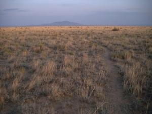 An image of a semi-arid grassland