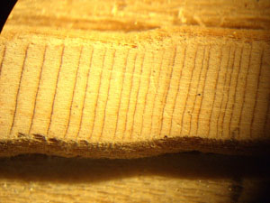 A prepared tree core under magnification. Note the small rings. This tree is either really slow growing, really stressed, or both.