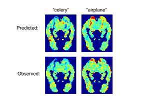 predicted and observed fMRI images