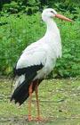 It's a stork. Get it?