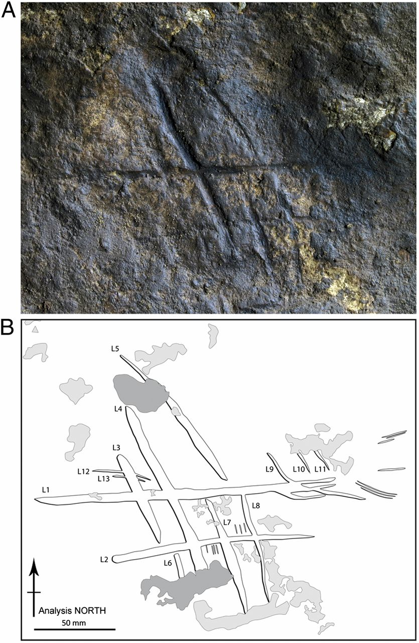 The lines engraved by Neanderthals, and a sketch displaying the lines that don't show up clearly.