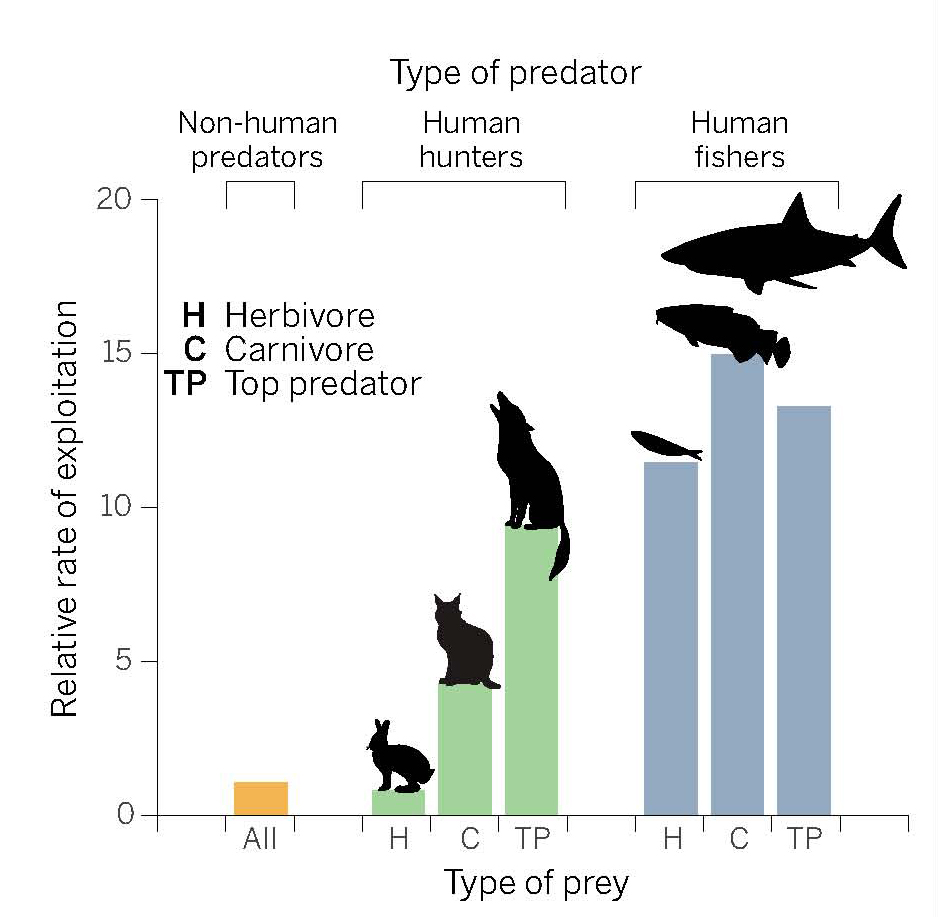 Humans exploit land and marine animals at much higher rates than other predators do.