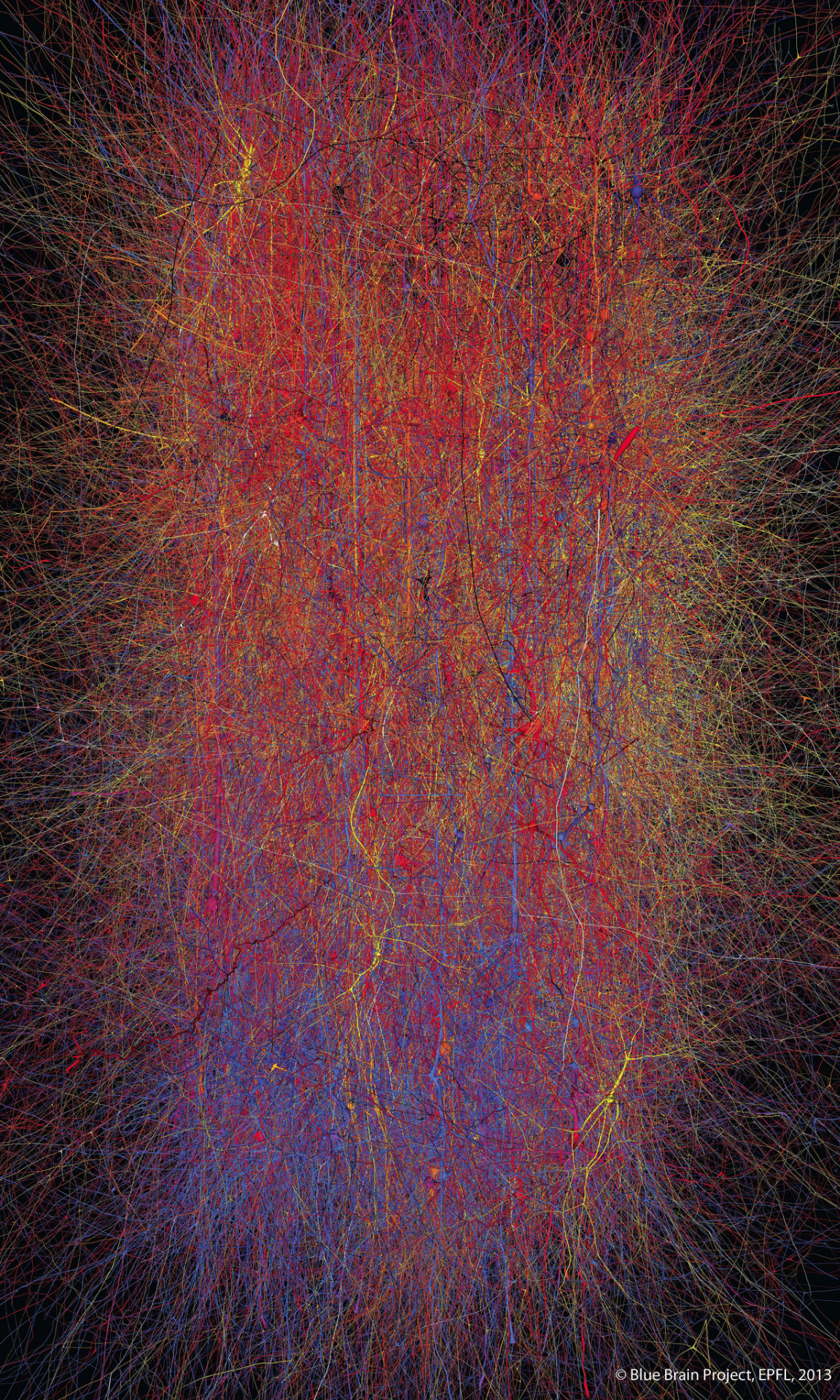"An image from the Blue Brain project, showing the complexity of the mammalian neocortical column. Shown here is ""just"" 10,000 neurons and 30 million interconnections. A human brain is millions of times more complex than this."