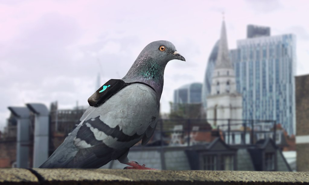 The Pigeon Air Patrol is ready to measure air pollution with backpack-strapped air-quality sensors