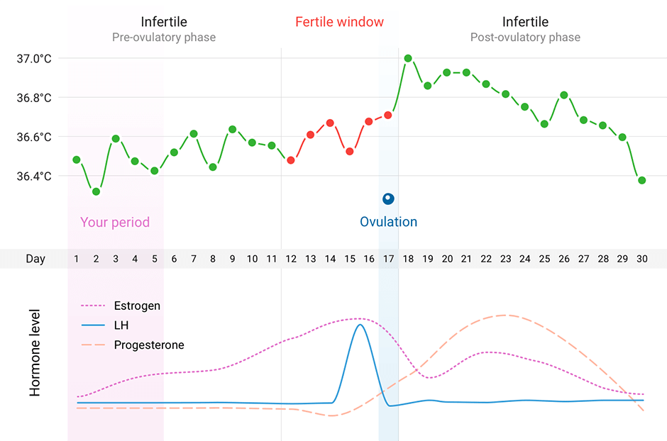 A graph showing the body temperature and hormone levels during a woman's menstrual cycle.