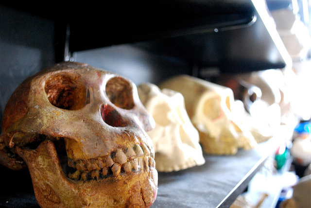 Did Africans join in on archaic interbreeding?